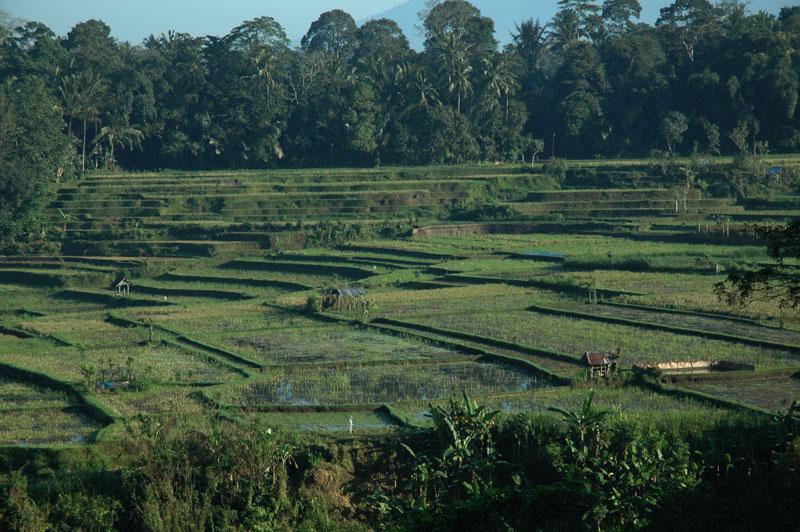 Bambu Indah view