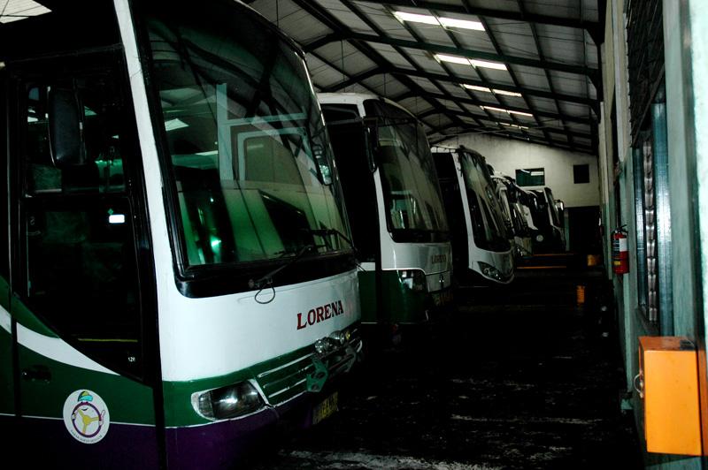 Lorena buses